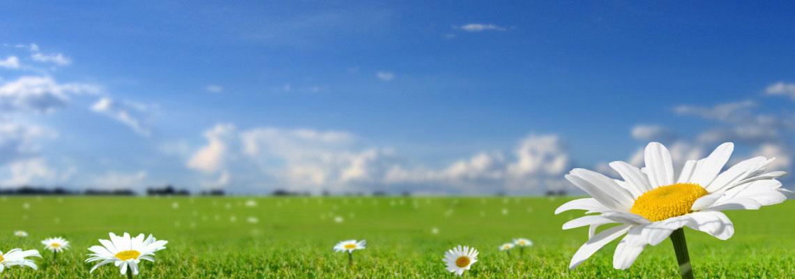 gestione area ecologica